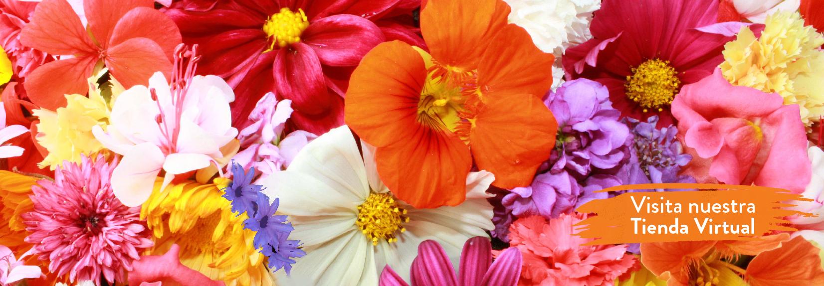 Página Web - Día de la madre 2-03